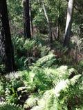 El bosque de la hierba de los helechos sale árbol del bosque de las ramas del cielo azul foto de archivo