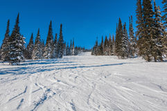 El bosque de la montaña arrastra la cuesta del esquí Foto de archivo