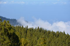 El bosque de la montaña se nubla el paisaje Teide, cuesta, cielo, lanscape nublado Imagen de archivo