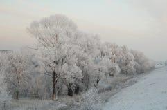 El bosque de la nieve Imágenes de archivo libres de regalías