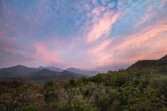 El bosque de la puesta del sol Fotografía de archivo libre de regalías