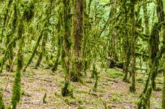 El bosque de la selva Foto de archivo libre de regalías