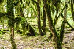 El bosque de la selva Imágenes de archivo libres de regalías