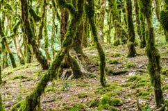 El bosque de la selva Foto de archivo