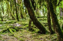 El bosque de la selva Fotografía de archivo libre de regalías