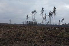 El bosque de muerte Fotos de archivo