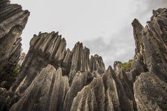 El bosque de piedra oscila 3 granangulares Fotografía de archivo