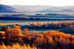 El bosque del abedul blanco del otoño en la puesta del sol del prado Fotografía de archivo libre de regalías