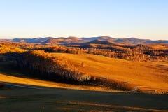 El bosque del abedul en puesta del sol Imagen de archivo