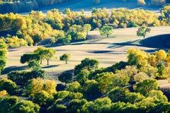 El bosque del autmn en la puesta del sol de los prados Fotos de archivo libres de regalías