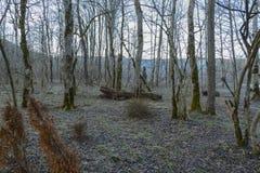 El bosque del invierno Fotografía de archivo