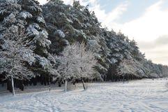El bosque del invierno fotografía de archivo libre de regalías
