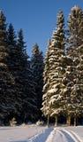 El bosque del invierno Imagenes de archivo