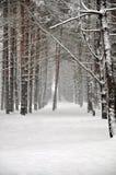 El bosque del invierno foto de archivo