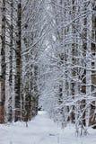 El bosque del invierno cubrió nieve Fotografía de archivo