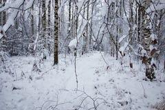 El bosque del invierno cubrió nieve Foto de archivo