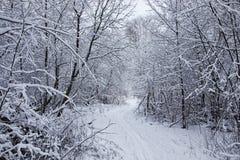 El bosque del invierno cubrió nieve Imagen de archivo libre de regalías