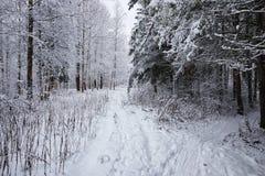 El bosque del invierno cubrió nieve Fotografía de archivo libre de regalías