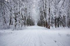 El bosque del invierno cubrió nieve Foto de archivo libre de regalías