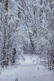 El bosque del invierno cubrió nieve Fotos de archivo