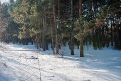 El bosque del invierno en nieve La madera en el invierno en Rusia, Siberia Imagen de archivo libre de regalías