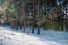 El bosque del invierno en nieve La madera en el invierno en Rusia, Siberia Fotos de archivo libres de regalías