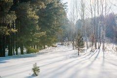 El bosque del invierno en nieve La madera en el invierno en Rusia, Siberia Foto de archivo