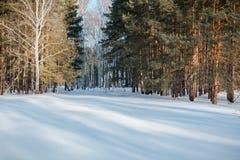 El bosque del invierno en nieve La madera en el invierno en Rusia, Siberia Fotografía de archivo libre de regalías