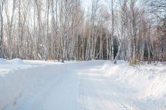 El bosque del invierno en nieve La madera en el invierno en Rusia, Siberia Fotografía de archivo
