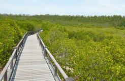 El bosque del mangle en Asia Fotografía de archivo libre de regalías