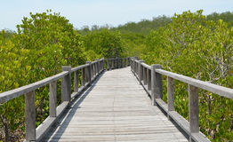El bosque del mangle en Asia Imagen de archivo libre de regalías