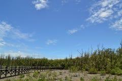 El bosque del mangle y el cielo Fotografía de archivo