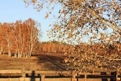 El bosque del otoño Imagenes de archivo