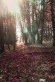 El bosque del otoño de Coloorful, parque abandonado, sol irradia, salida del sol Caída viva en bosque, árboles en rayos de sol Imagen de archivo libre de regalías