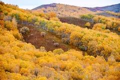 El bosque del otoño en el canto Imagenes de archivo