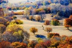 El bosque del otoño en el prado Imagen de archivo
