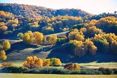 El bosque del otoño en la estepa Fotos de archivo