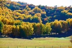 El bosque del otoño en la estepa Imagenes de archivo