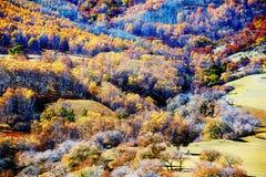 El bosque del otoño en la ladera Fotografía de archivo