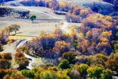 El bosque del otoño en la ladera Fotografía de archivo libre de regalías