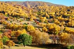 El bosque del otoño en la pradera Foto de archivo