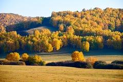 El bosque del otoño en la puesta del sol de la montaña Imagenes de archivo