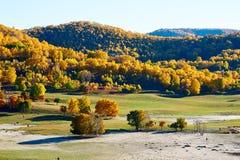 El bosque del otoño en las colinas Fotos de archivo