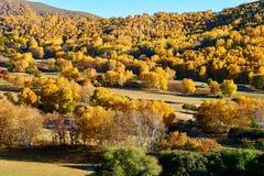 El bosque del otoño en los prados Fotografía de archivo