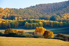 El bosque del otoño en los prados Fotos de archivo libres de regalías