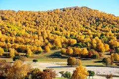 El bosque del otoño en el pasto Imágenes de archivo libres de regalías