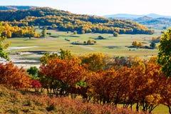El bosque del otoño en el prado Imagenes de archivo