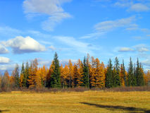 El bosque del otoño en Yakutia Fotos de archivo libres de regalías
