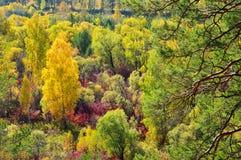 El bosque del otoño La visión desde la tapa Foto de archivo