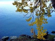 El bosque del otoño reflejó en un lago Otoño de oro Reflexión del cielo en agua Los días calientes pasados del otoño Verano indio fotografía de archivo libre de regalías